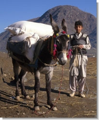 Photo: Pack donkey in Pakistan by Paul Starkey ©